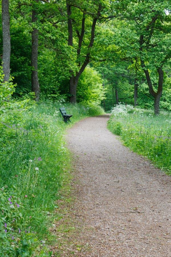 Sentier piéton en bois d'été photos stock