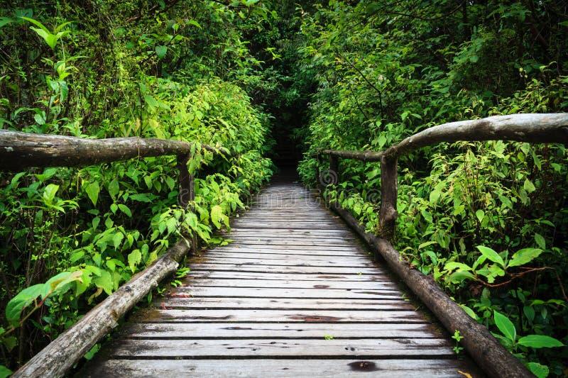 Sentier piéton en bois dans la forêt tropicale tropicale en Thaïlande photographie stock libre de droits