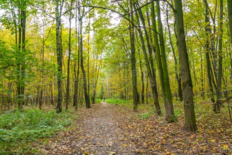 Sentier piéton en parc de Kuzminki, paysage d'automne image libre de droits