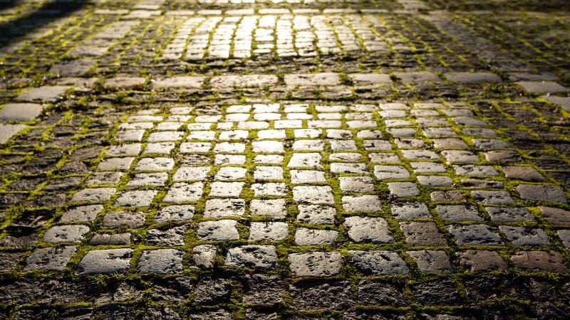Sentier piéton en pierre avec de la mousse à la lumière du soleil de matin Fond féerique, magique, mystique images stock