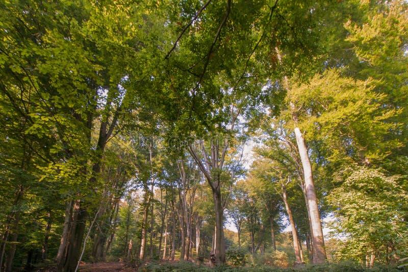 Sentier piéton entre les arbres dans la région boisée photos stock