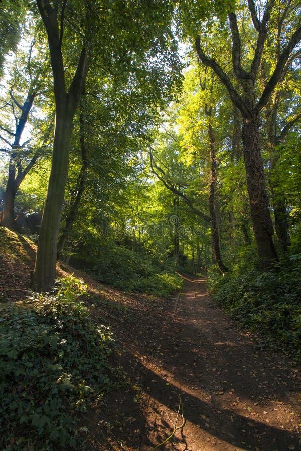 Sentier piéton entre les arbres dans la région boisée images libres de droits