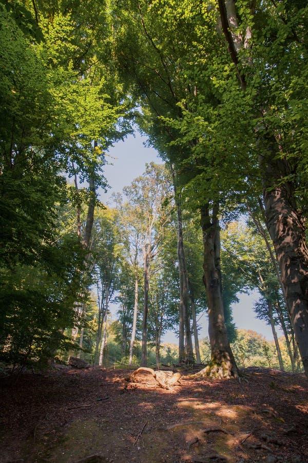 Sentier piéton entre les arbres dans la région boisée image libre de droits