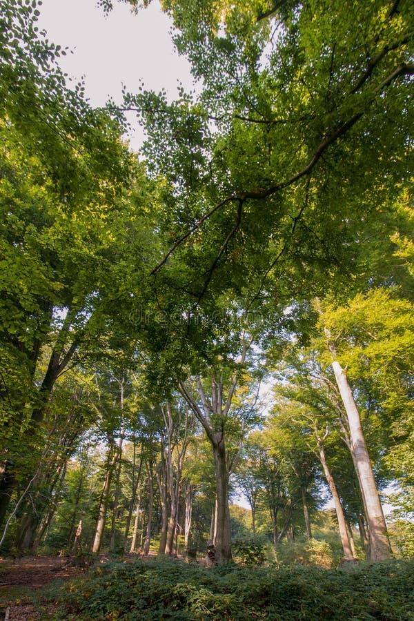 Sentier piéton entre les arbres dans la région boisée photographie stock libre de droits