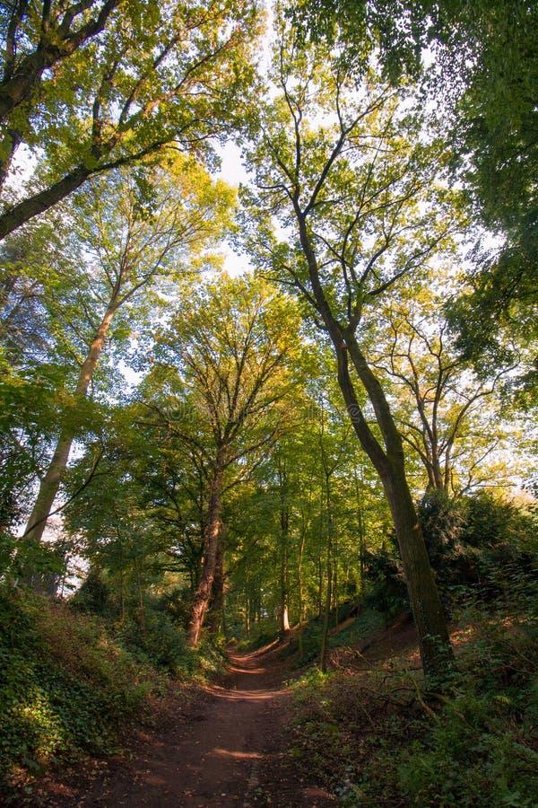 Sentier piéton entre les arbres dans la région boisée image stock