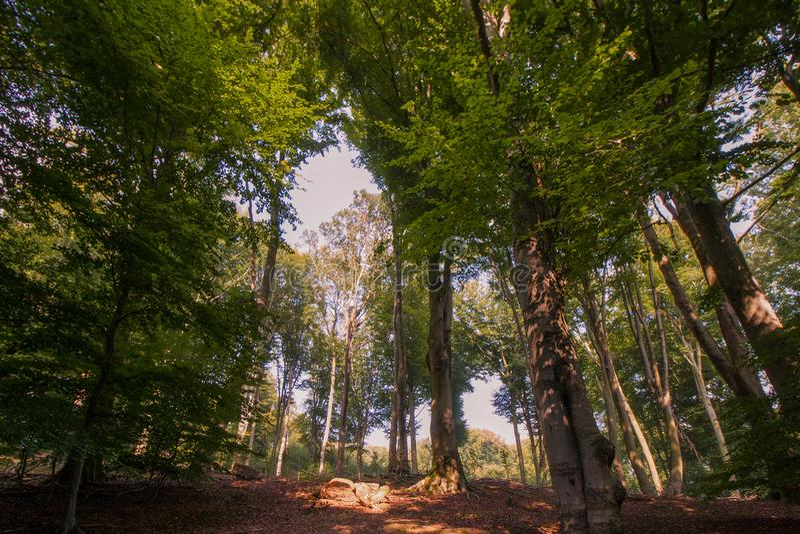 Sentier piéton entre les arbres dans la région boisée photo libre de droits