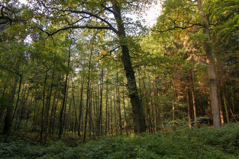 Sentier piéton entre les arbres dans Viersen images stock