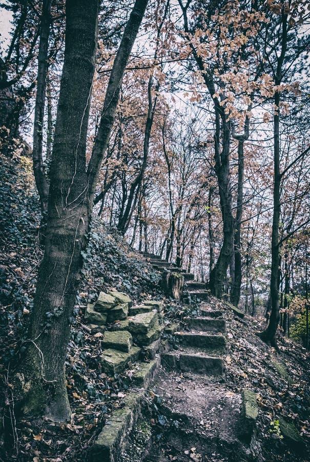 Sentier piéton lapidé cassé dans la forêt d'automne, filtre analogue photos stock