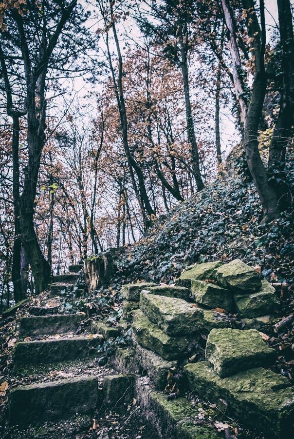 Sentier piéton lapidé cassé dans la forêt d'automne, filtre analogue photographie stock