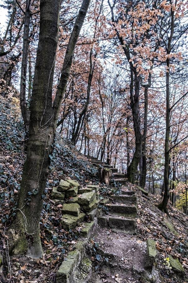 Sentier piéton lapidé cassé dans la forêt d'automne, Nitra photo libre de droits