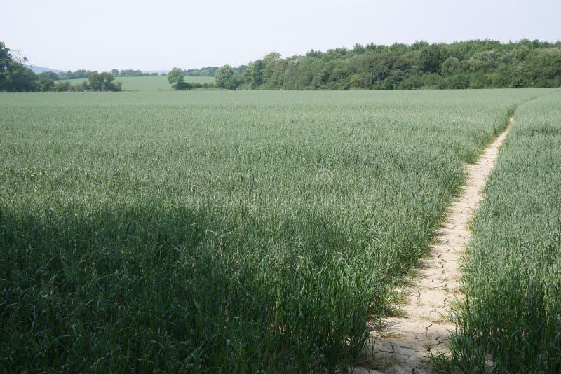Sentier piéton nu sur le sol très sec dans vue cultivée de champ de culture la grande avec des arbres photo libre de droits