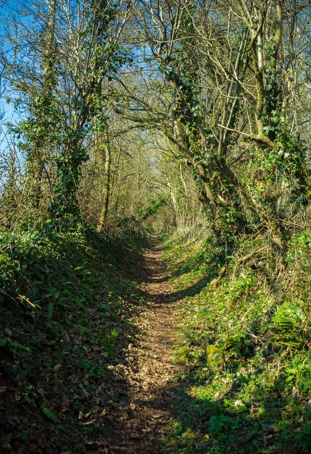 Sentier piéton par la région boisée anglaise britannique typique au printemps photographie stock libre de droits