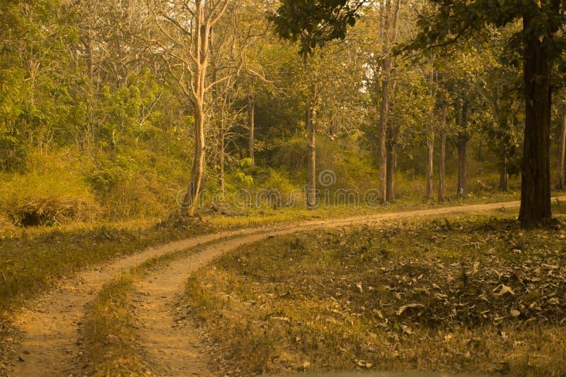 Sentier piéton par une forêt pendant la saison d'automne ou d'automne photos libres de droits