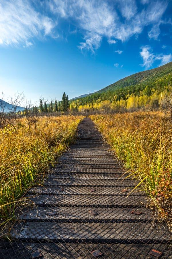 Sentier piéton sur la montagne dans Kanas photographie stock libre de droits