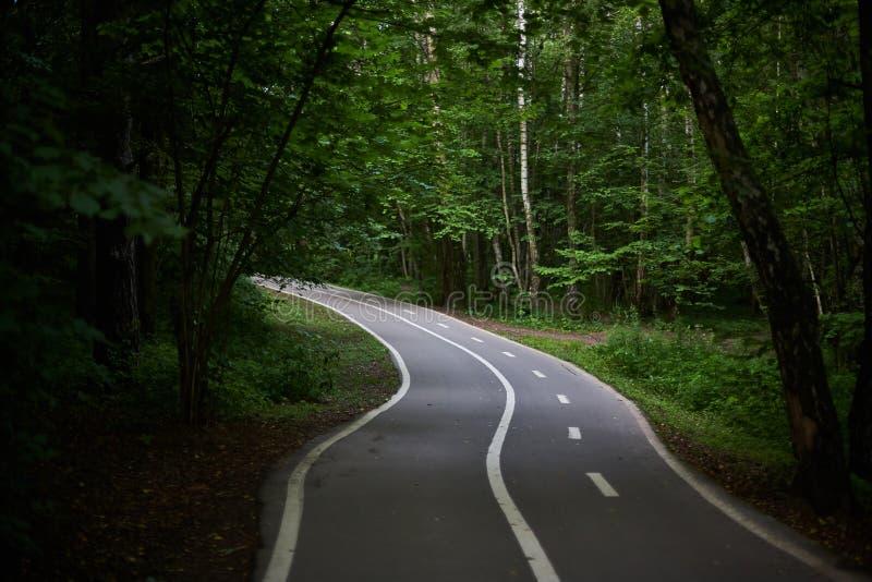 Sentier piéton vide avec un chemin de vélo dans la forêt verte photos libres de droits