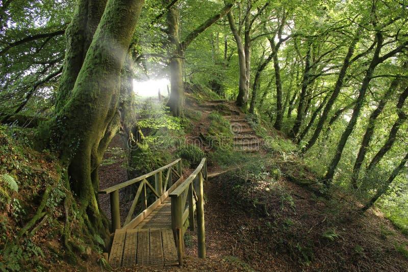 Sentieri nel bosco, Inghilterra immagine stock libera da diritti
