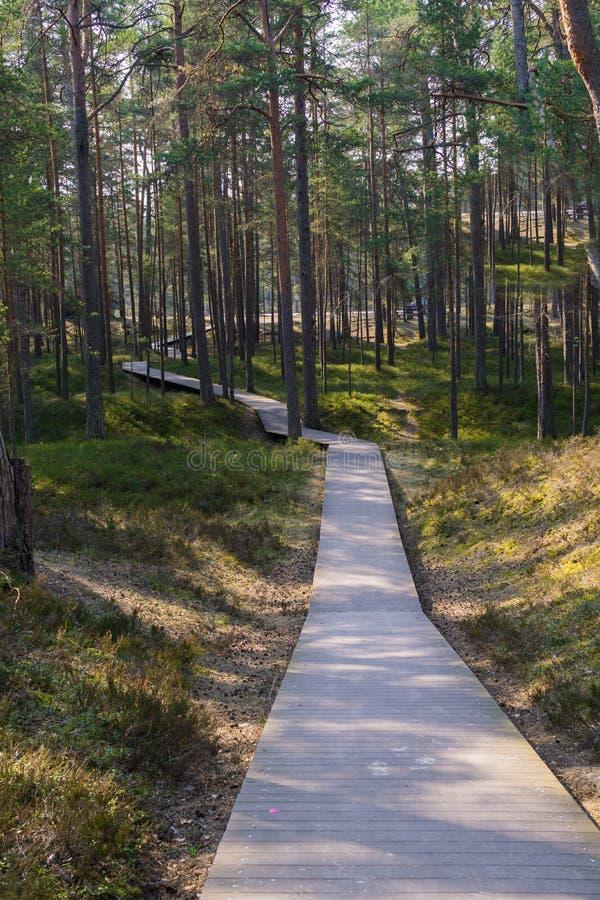 Sentiero costiero attraverso le dune alla costa del golfo di Riga fotografie stock