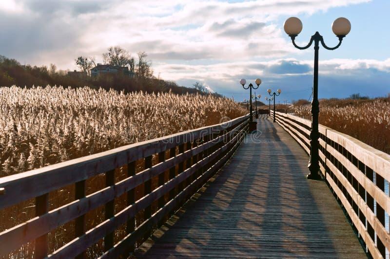 Sentiero costiero di legno attraverso le canne alla luce solare, una passeggiata di legno della plancia con i pali della luce immagine stock