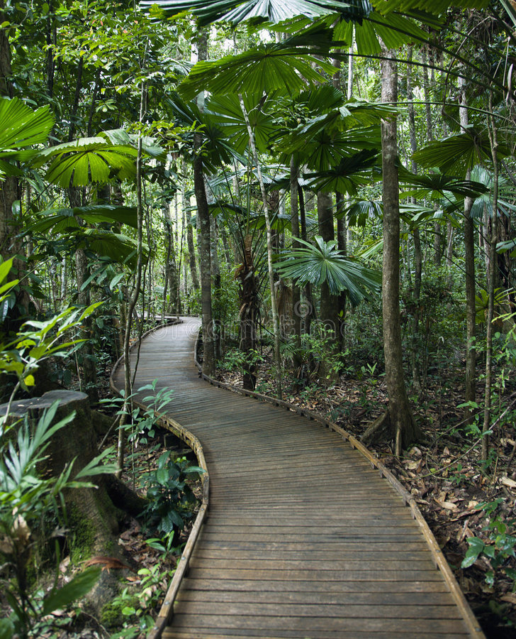 Sentiero costiero in foresta pluviale. fotografia stock libera da diritti
