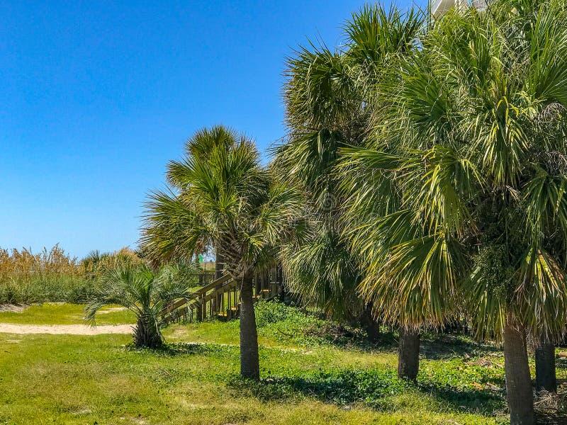 Sentiero costiero fronte mare Myrtle Beach South Carolina di Myrtle Beach fotografie stock
