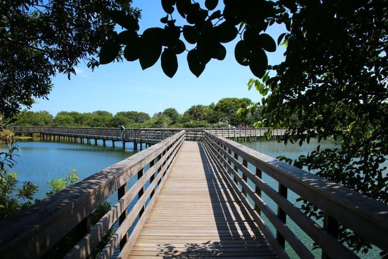 Sentiero costiero sotto gli alberi Cay Wetlands verde immagini stock