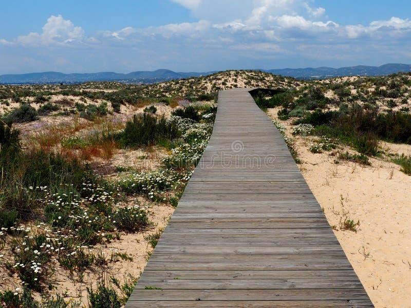 Sentiero costiero su Ilha Da Culatra nella regione di Algarve di Portogallo immagine stock libera da diritti