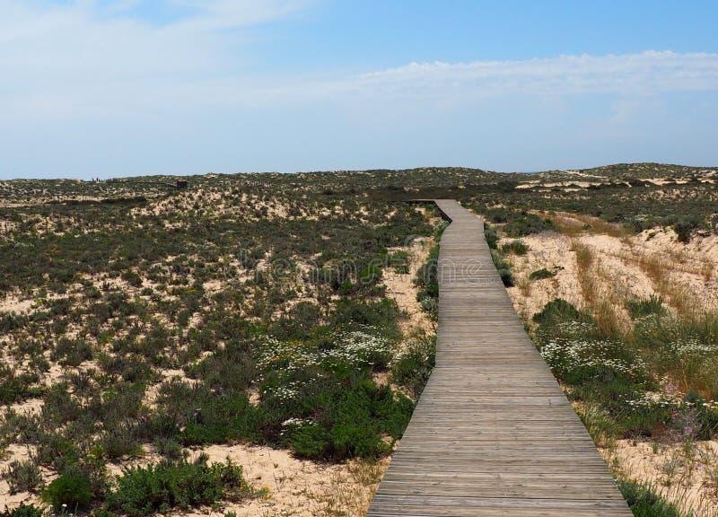 Sentiero costiero su Ilha Da Culatra nella regione di Algarve di Portogallo fotografia stock libera da diritti