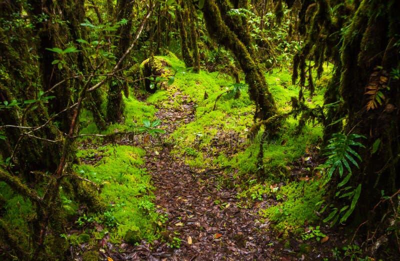 Sentiero didattico del Ka del ANG, parco nazionale di Doi Inthanon fotografia stock libera da diritti