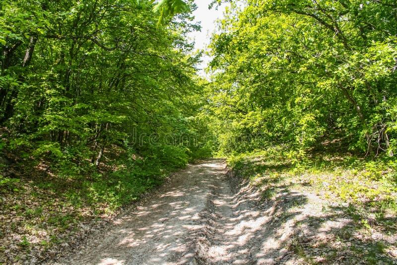 Sentiero forestale non pavimentato fotografia stock libera da diritti