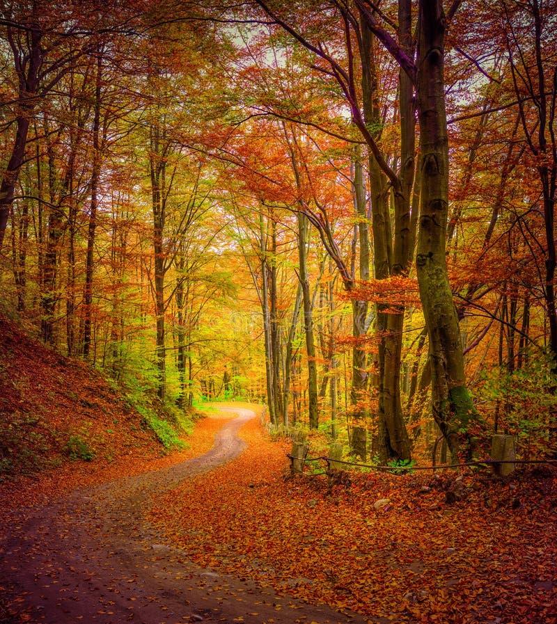 Sentiero forestale scuro nella foresta di autunno immagine stock