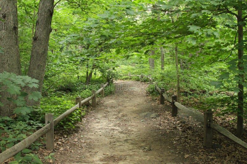 Sentiero nel bosco con il recinto immagini stock libere da diritti
