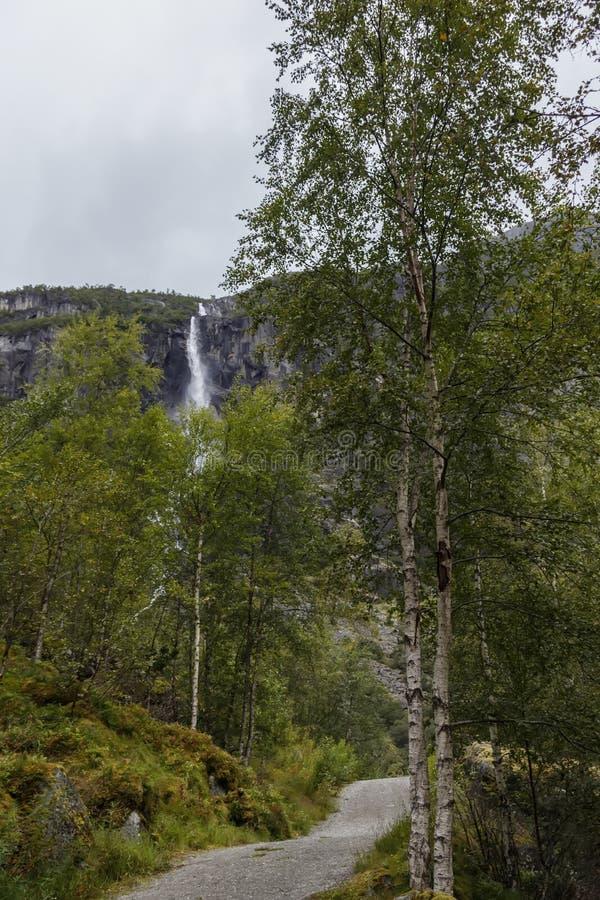Sentiero nel bosco fra gli alberi di betulla con una cascata della montagna fotografia stock libera da diritti