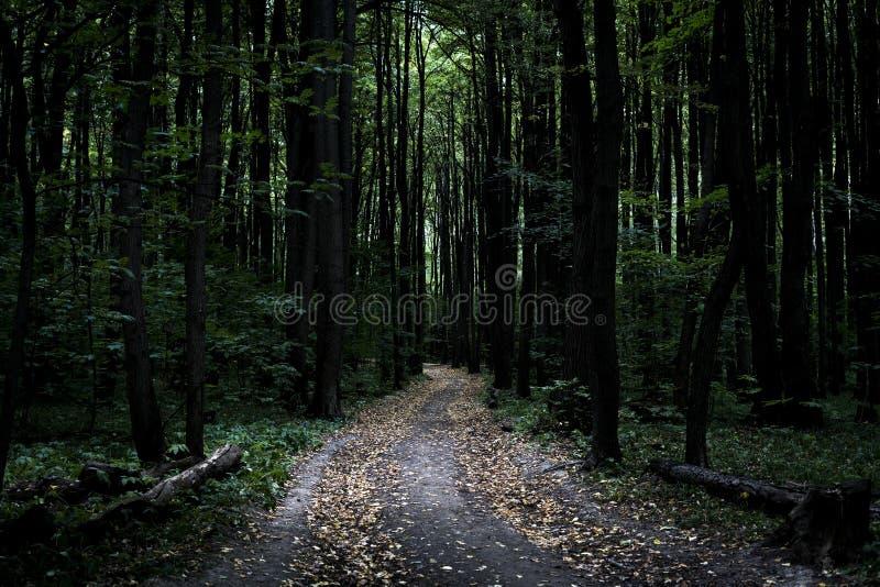 Sentiero nel bosco pesante nebbioso lunatico scuro con molti alberi immagini stock