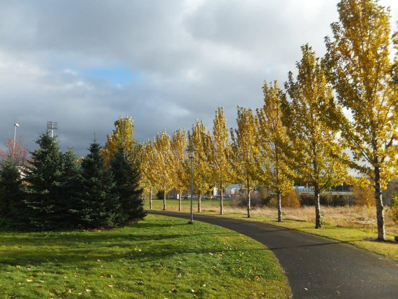 Sentiero per pedoni allineato con gli alberi di betulla in autunno fotografie stock