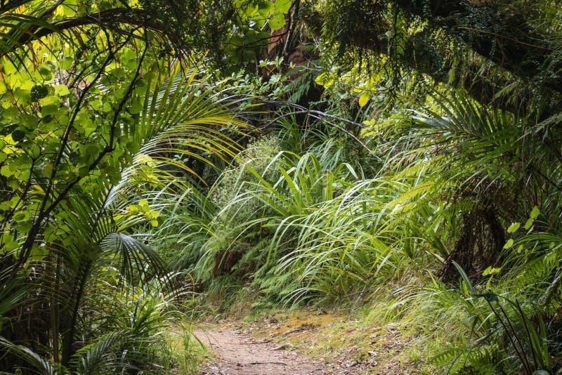 Sentiero per pedoni che conduce alla foresta pluviale tropicale fotografie stock libere da diritti