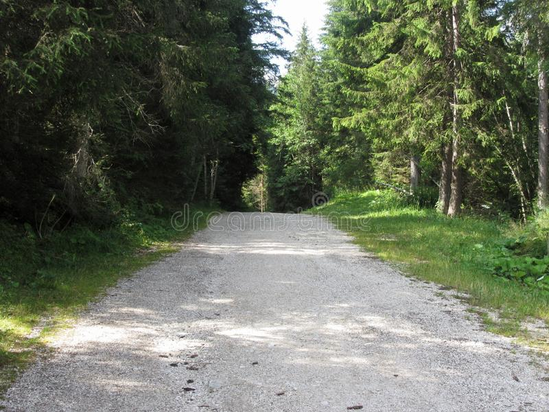 Sentiero per pedoni che conduce attraverso una foresta di conifere verde all'estate Villa della La, Bolzano, Alto Adige, Tirolo d immagine stock libera da diritti