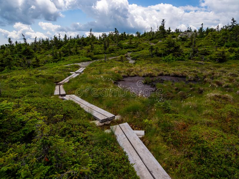 Sentiero per pedoni del bordo della palude attraverso il terreno alpino della montagna fotografia stock