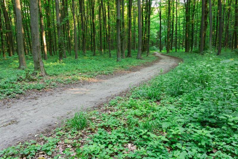 Sentiero per pedoni della curva attraverso la foresta verde fotografie stock