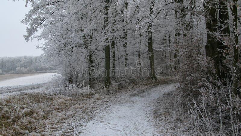 Sentiero per pedoni di Snowy/strada aziendale che conduce in una foresta con ghiaccio e gli alberi innevati immagini stock libere da diritti