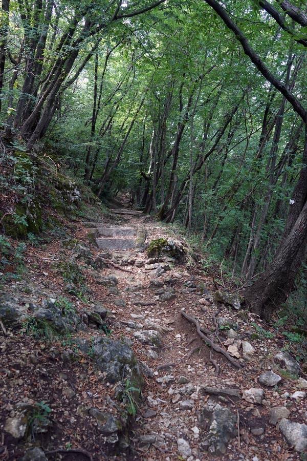 Sentiero per pedoni in foresta fotografia stock libera da diritti