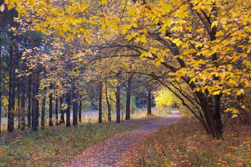 Sentiero per pedoni in legno di autunno fotografia stock libera da diritti
