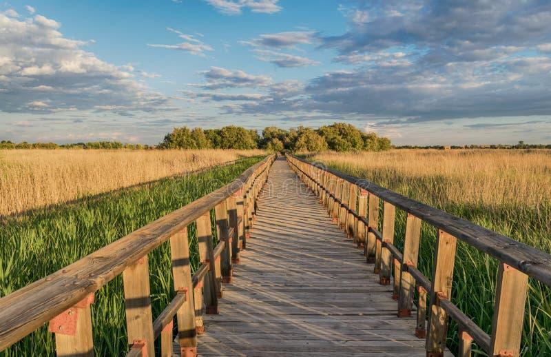 Sentiero per pedoni in natura Parco nazionale Tablas de Daimiel Ciudad reale spain fotografie stock libere da diritti