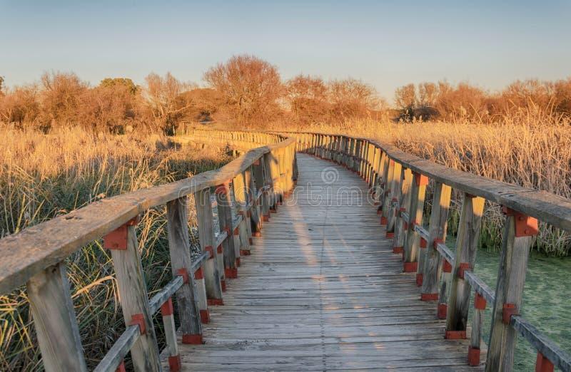 Sentiero per pedoni in natura Parco nazionale Tablas de Daimiel Ciudad reale spain immagini stock libere da diritti