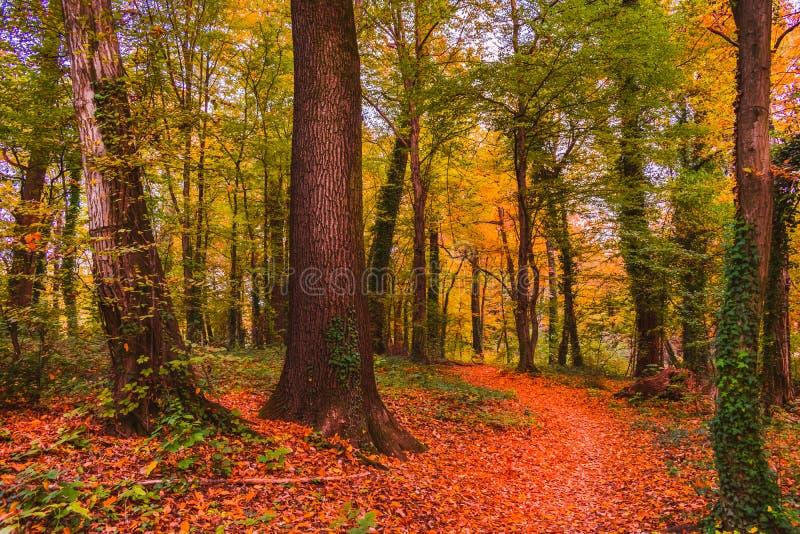 Sentiero per pedoni nel parco in autunno, Zagabria, Croazia, Europa di Maksimir immagine stock libera da diritti