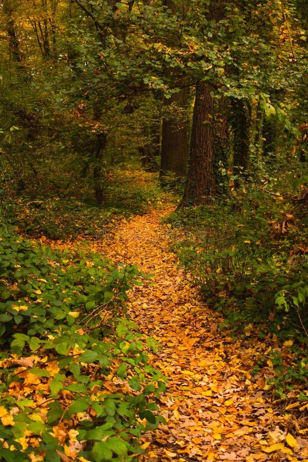 Sentiero per pedoni nel parco in autunno, Zagabria, Croazia, Europa di Maksimir immagini stock libere da diritti