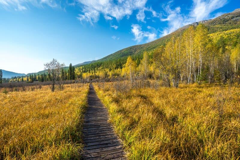 Sentiero per pedoni sulla montagna in Kanas fotografia stock