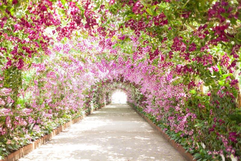 Sentiero per pedoni in un giardino botanico con le orchidee che allineano il percorso fotografia stock libera da diritti