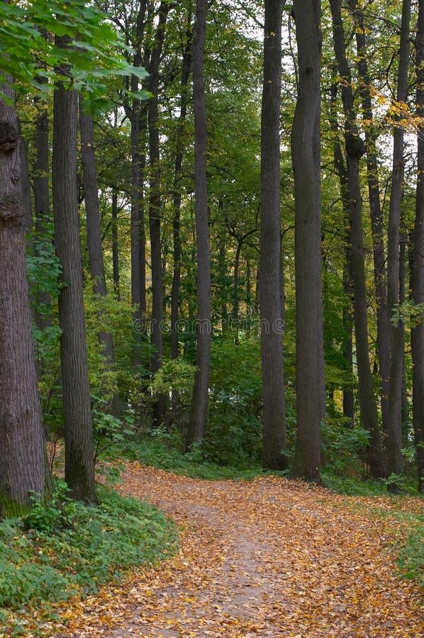 Sentiero per pedoni in un legno della calce fotografia stock