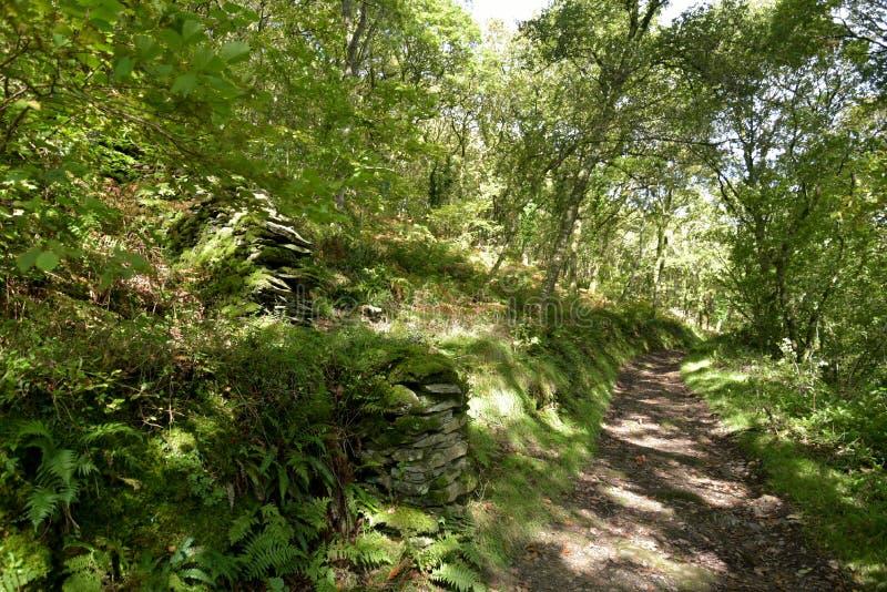 Sentiero per pedoni a Watersmeet, Lynmouth, Exmoor, Devon del nord fotografie stock libere da diritti