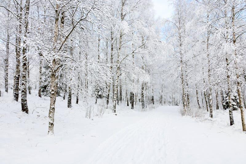 Sentiers piétons de l'hiver images stock